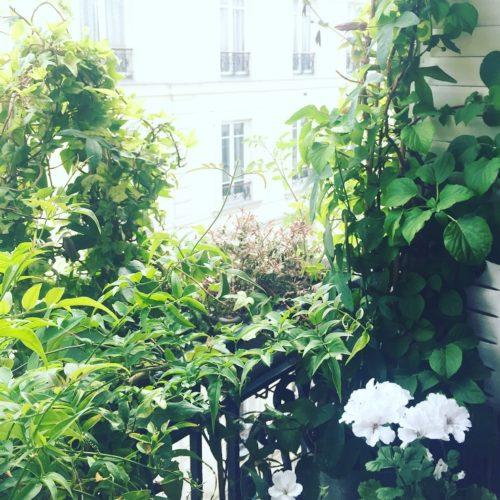 Un rebord de fenêtre 100% végétal dans le 9ème