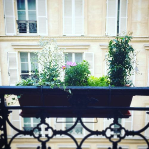 Végétalisation d'un appartement bourgeois dans le 9ème