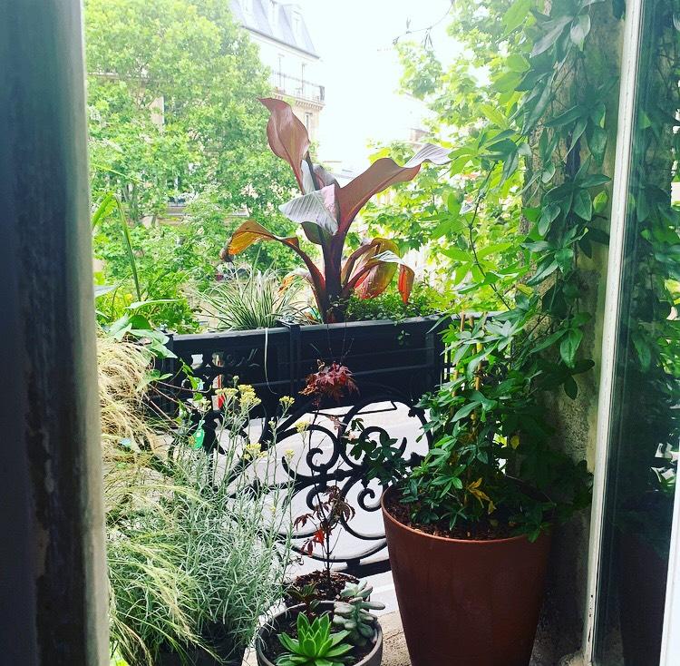 Une fenêtre végétale dans le 19è