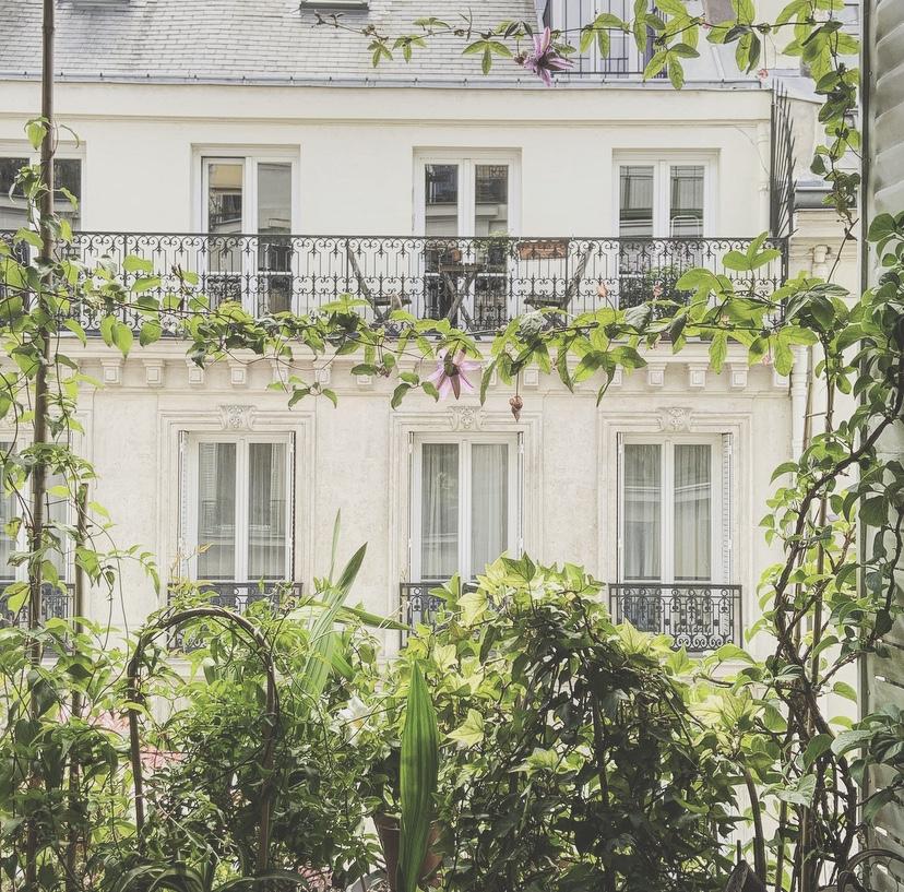 Luxuriance à la fenêtre (9è)